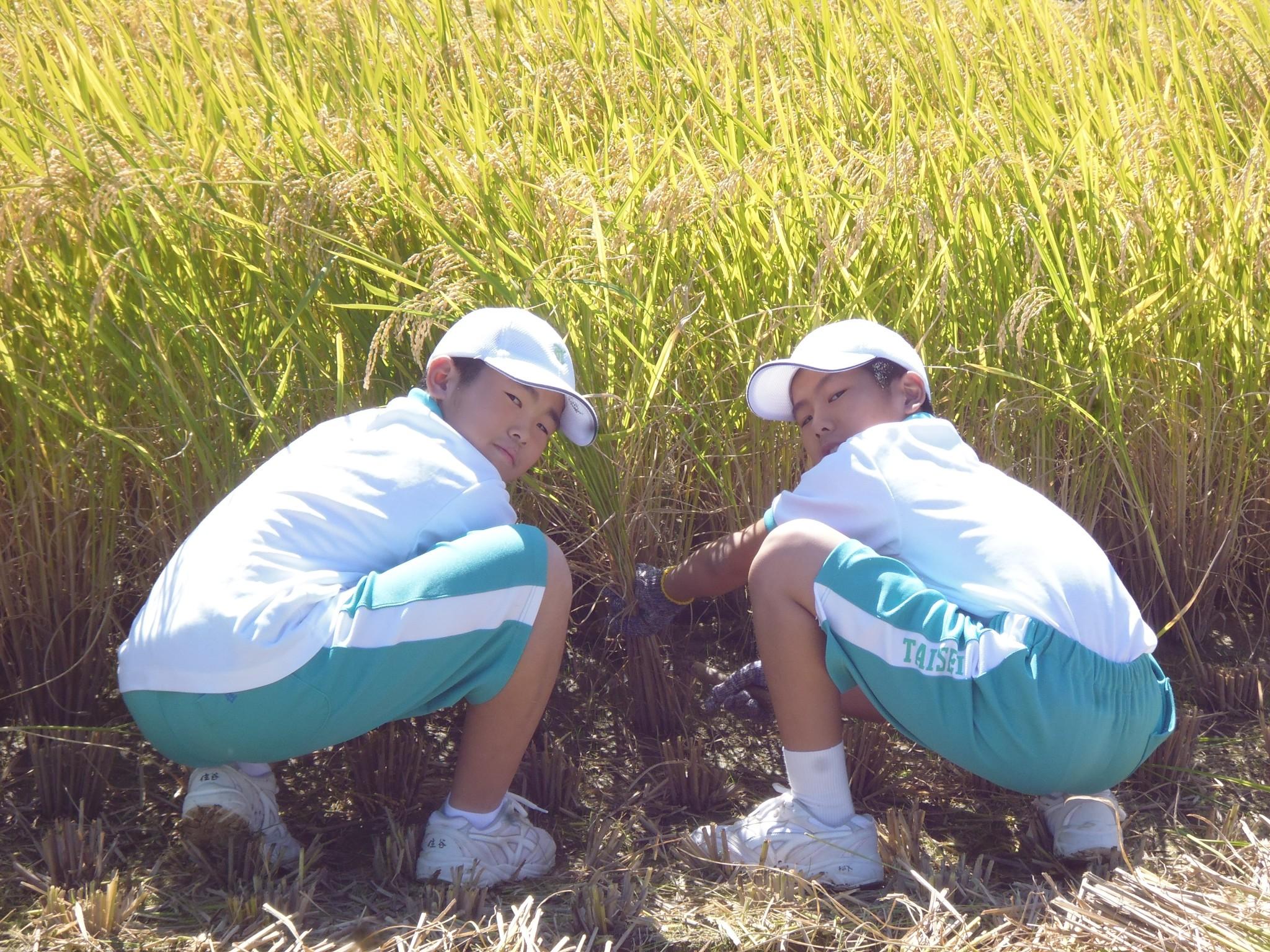 【中1】農業体験