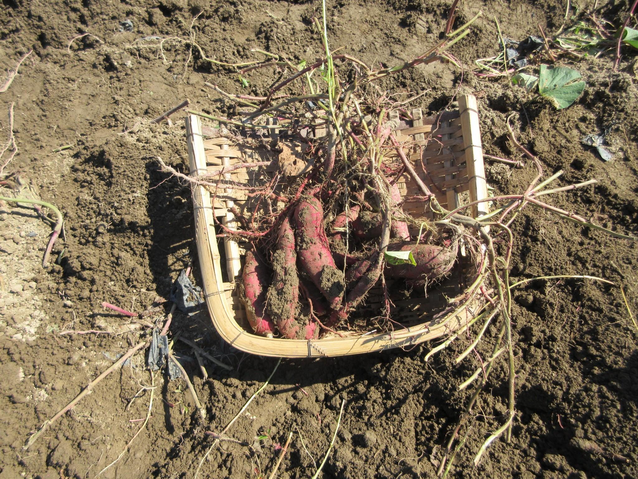 【中1、2】農業体験